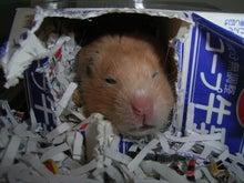 $ネズミ達とRCの記録簿