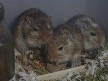 ネズミ達とRCの記録簿