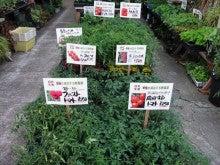 $ポイントは3つだけ!必ず収穫できる野菜づくり虎の巻