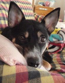 $shiとマツ犬のお気楽ブログ♪