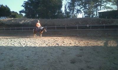 馬を愛する男のブログ Ebosikogen Horse Park-チェリーの調教