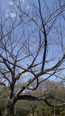 旋回式ねこパンチ~大石真翔の日々~-DVC00030.jpg