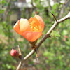 3月17日 誕生花の画像