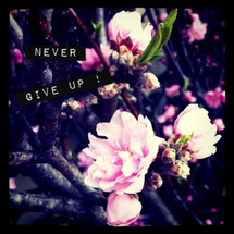 Never give…