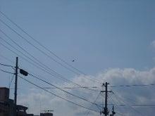 福島県在住ライターが綴る あんなこと こんなこと-地震110319-3