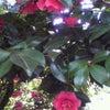 薔薇のバッグの画像