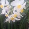 春につつまれての画像