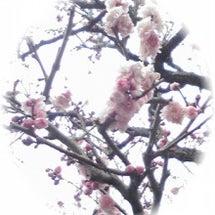 [春分の日]の意味、…