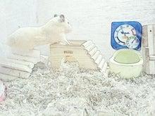 キンクマ楓ちゃんの日常-C360_2011-03-17 01-18-47.jpgC360_2011-03-17 01-18-47.jpg
