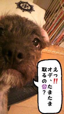ミックス犬(柴犬×ボストンテリア) ミルモの日記-image0003.jpg