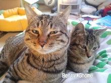 $Berry Gnome-猫