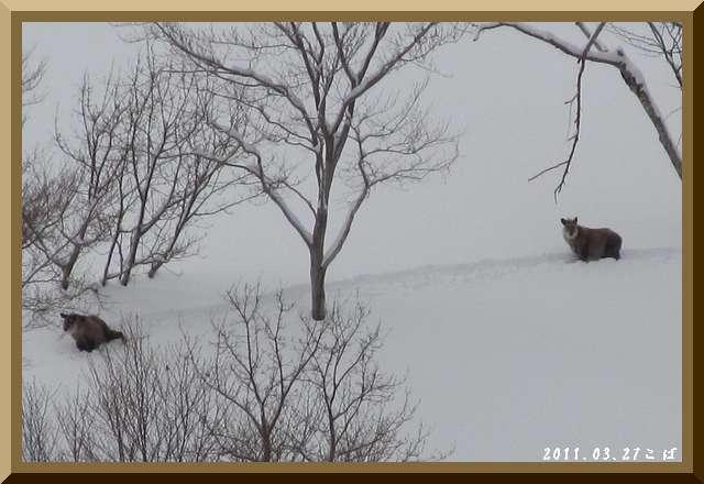 ロフトで綴る山と山スキー-0327_0825