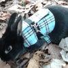 日本動物愛護協会のサイトの情報です。の画像