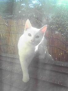 猫マンガ  「猫12匹といれば」 -101110_1012~01.JPG