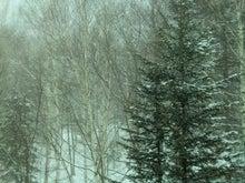 $松尾祐孝の音楽塾&作曲塾~音楽家・作曲家を夢見る貴方へ~-トマムの雪景色~樹林