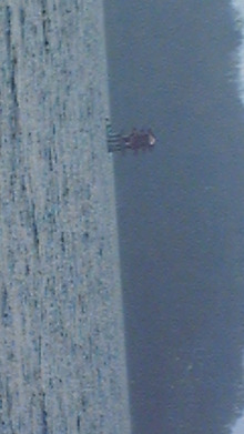 Michael Satsuki(美華慧龍 皐月)のブログ-DVC00069.jpg