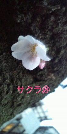 秋山実希オフィシャルブログ『MIKI JAM』powered by アメブロ-20110331181242.jpg