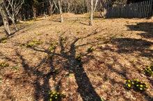 白神山地ツアーで能代山本地区の活性化すっぺ-2011年十二湖オープン8