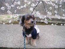 杏のブログ-夙川