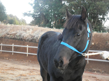 馬を愛する男のブログ Ebosikogen Horse Park-可愛いアーサー