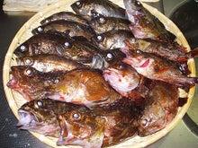 $月之新の東京湾釣り日記