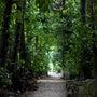 うちな〜の森。