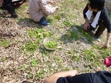 森からの絵手紙-山菜
