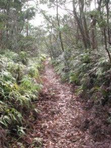 自然、戦跡、ときどき龍馬-玉木坂の西側の道