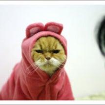 しかめっ面のネコ