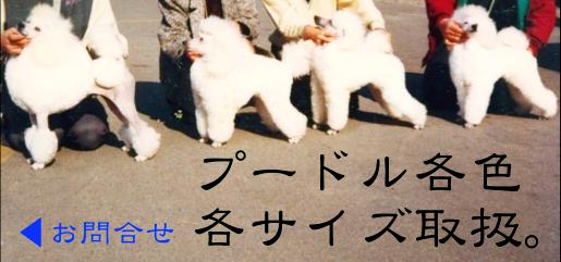 $五井さんと素敵なデザイナーさんとゆかいな仲間たち