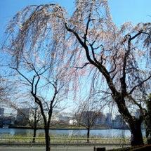 春のうららの隅田川♪