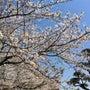 2011.4.6 桜…