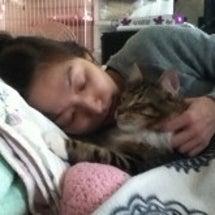 被災地 猫の支援