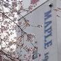 2011/本日の桜