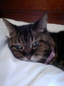 寝るネコは育つ-sizimi110408