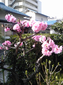 浄土真宗親鸞会         広島のつどい-110409_090204.jpg