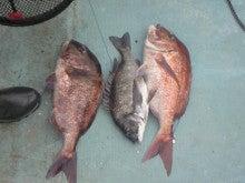 和歌山県異色の釣り船「爆釣!大吉丸」-201104091707000.jpg