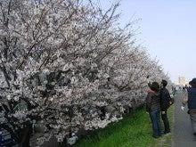 アコmamaのひとりごと-sakura