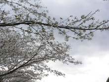 八幡池の四季