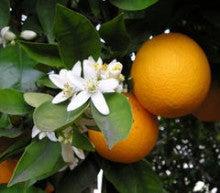 Rera Pirka-オレンジ