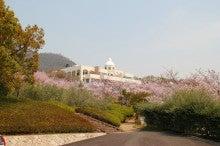 ~ぶらっとひとり旅~-桜とオリーブ