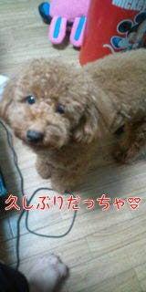 ぴこ、ぴか、ぴぴ悠々日記 & クランキー日記-20101204232352.jpg