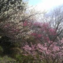 もう一つ、春らしい話…