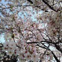 春の京都ッ