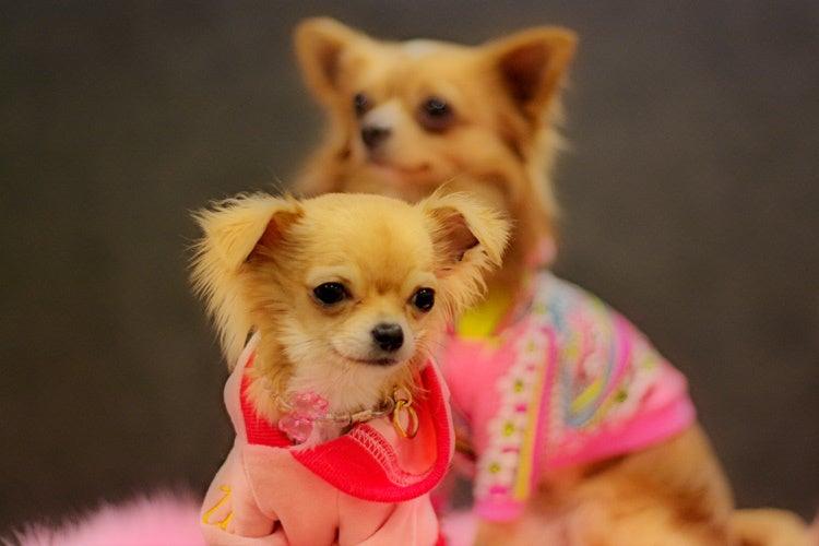 Dogwear Shop BhangrA