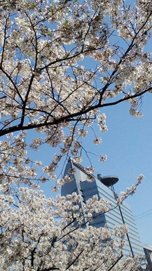サザナミケンタロウ オフィシャルブログ「漣研太郎のNO MUSIC、NO NAME!」Powered by アメブロ-110412_1336~01.jpg