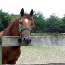 被災馬支援のお願いで…