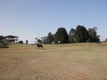 馬を愛する男のブログ Ebosikogen Horse Park-風と星の広場にて
