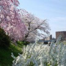 華やかな春