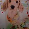 犬。の画像